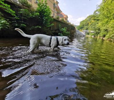 hund, wandern_20200816-IMG_20200816_111105