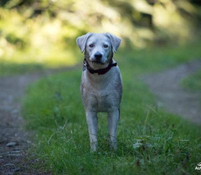hund, wandern_20200929-DSC_3330